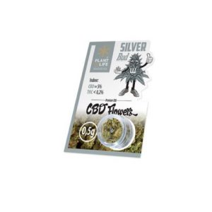 CBD flowers silver bud
