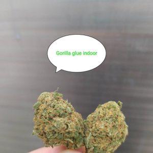 Cbd wiet Gorilla glue